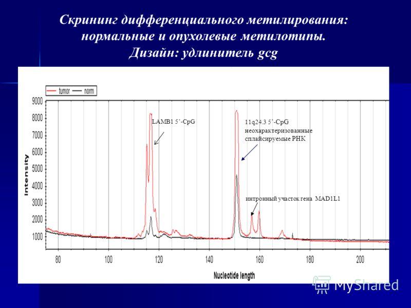Скрининг дифференциального метилирования: нормальные и опухолевые метилотипы. Дизайн: удлинитель gcg интронный участок гена MAD1L1 LAMB1 5-CpG 11q24.3 5 -CpG неохарактеризованные сплайсируемые РНК