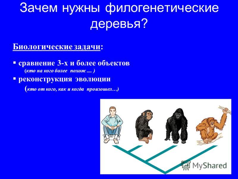 Зачем нужны филогенетические деревья? Биологические задачи: сравнение 3-х и более объектов (кто на кого более похож.... ) реконструкция эволюции ( кто от кого, как и когда произошел…)