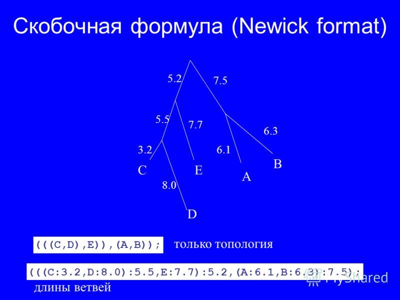 (((C:3.2,D:8.0):5.5,E:7.7):5.2,(A:6.1,B:6.3):7.5); длины ветвей (((C,D),E)),(A,B)); только топология Скобочная формула (Newick format) A B C D E 5.2 7.5 6.3 6.1 7.7 8.0 3.2 5.5