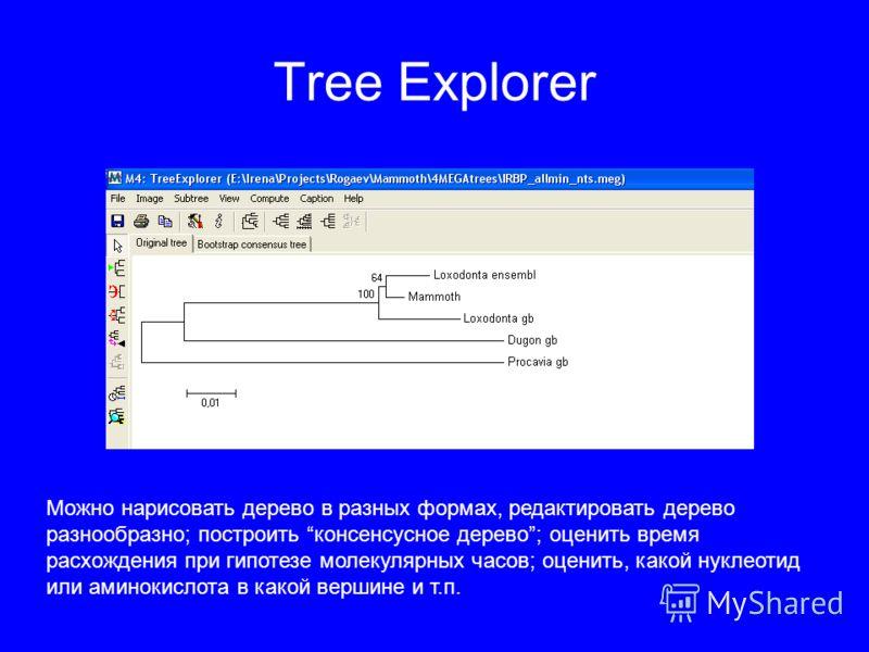 Tree Explorer Можно нарисовать дерево в разных формах, редактировать дерево разнообразно; построить консенсусное дерево; оценить время расхождения при гипотезе молекулярных часов; оценить, какой нуклеотид или аминокислота в какой вершине и т.п.