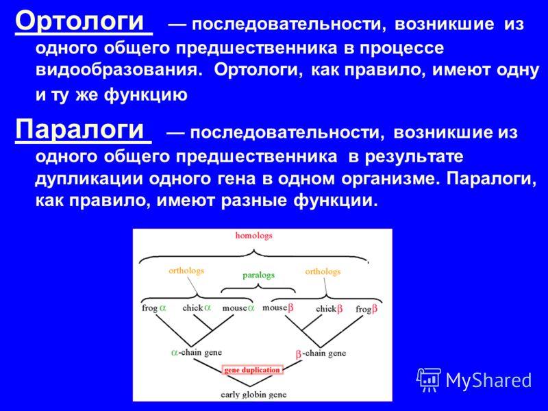 Ортологи последовательности, возникшие из одного общего предшественника в процессе видообразования. Ортологи, как правило, имеют одну и ту же функцию Паралоги последовательности, возникшие из одного общего предшественника в результате дупликации одно