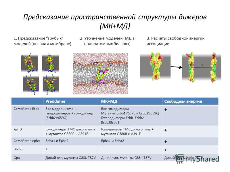 Предсказание пространственной структуры димеров (МК+МД) 1. Предсказание грубых моделей (неявн ая мембране) 2. Уточнение моделей (МД в полноатомных бислоях) 3. Расчеты свободной энергии ассоциации PreddimerMК+МДСвободная энергия Семейство ErbbВсе моде