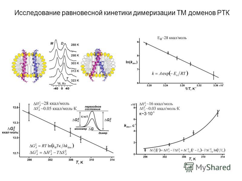Исследование равновесной кинетики димеризации ТМ доменов РТК