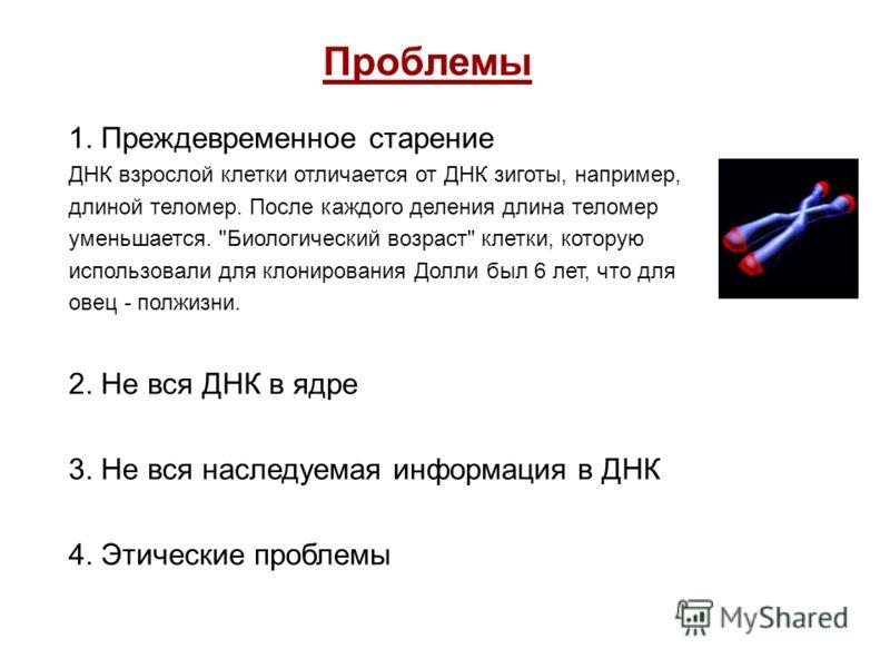 Проблемы 1. Преждевременное старение ДНК взрослой клетки отличается от ДНК зиготы, например, длиной теломер. После каждого деления длина теломер уменьшается.