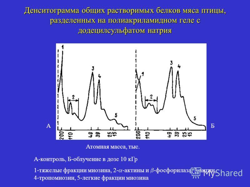 Денситограмма общих растворимых белков мяса птицы, разделенных на полиакриламидном геле с додецилсульфатом натрия А-контроль, Б-облучение в дозе 10 кГр 1-тяжелые фракции миозина, 2- -актины и -фосфорилаза, 3-актин, 4-тропомиозин, 5-легкие фракции мио