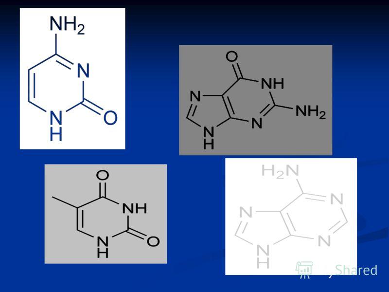 Аденин аминопроизводное пурина, бесцветные кристаллы; растворим в кислотах и щелочах, нерастворим в эфире и хлороформе. Аденин является составной частью нуклеиновых кислот. Получают аденин при кислотном гидролизе нуклеиновых кислот.пурина кислотахщел
