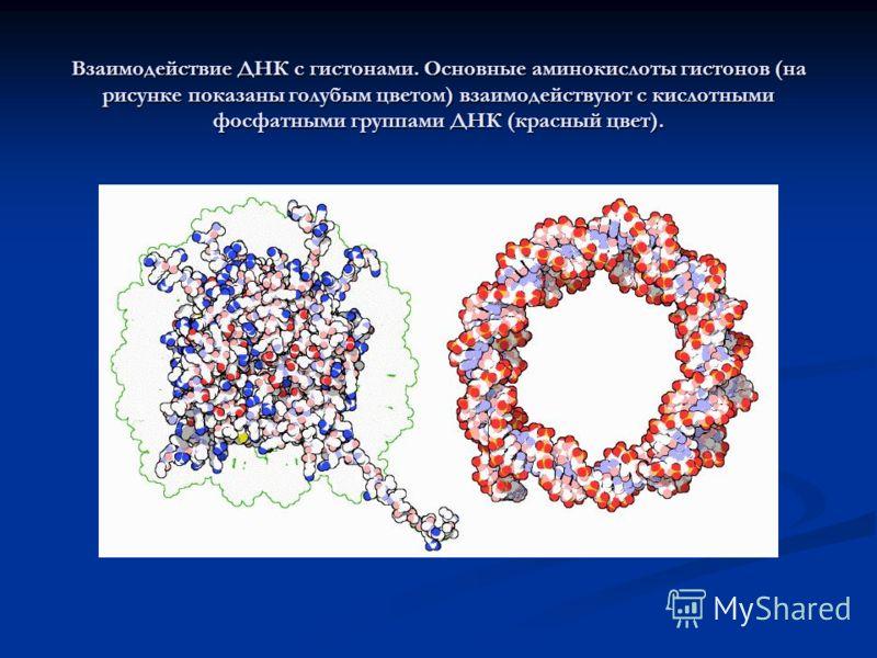 Взаимодействие с белками Все функции ДНК зависят от её взаимодействия с белками. Взаимодействия могут быть как неспецифическими, когда белок присоединяется к любой молекуле ДНК или зависеть от наличия особой последовательности. Ферменты также могут в