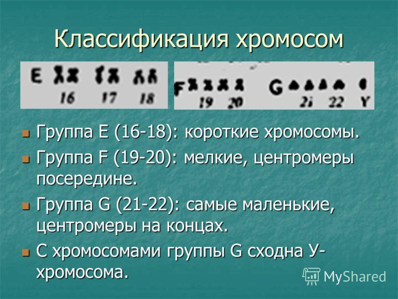Классификация хромосом Группа Е (16-18): короткие хромосомы. Группа Е (16-18): короткие хромосомы. Группа F (19-20): мелкие, центромеры посередине. Группа F (19-20): мелкие, центромеры посередине. Группа G (21-22): самые маленькие, центромеры на конц