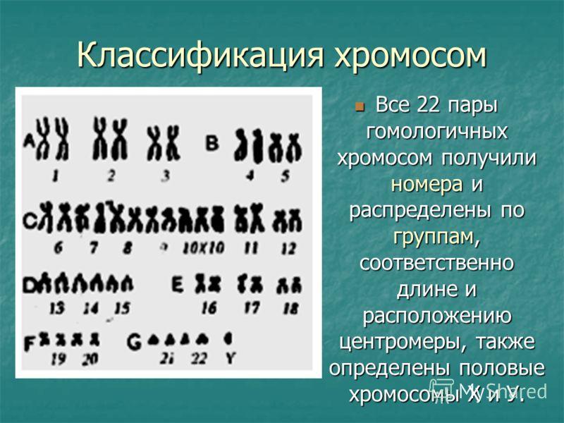 Классификация хромосом Все 22 пары гомологичных хромосом получили номера и распределены по группам, соответственно длине и расположению центромеры, также определены половые хромосомы Х и У. Все 22 пары гомологичных хромосом получили номера и распреде