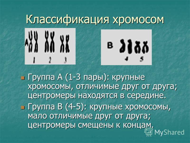 Классификация хромосом Группа А (1-3 пары): крупные хромосомы, отличимые друг от друга; центромеры находятся в середине. Группа А (1-3 пары): крупные хромосомы, отличимые друг от друга; центромеры находятся в середине. Группа В (4-5): крупные хромосо