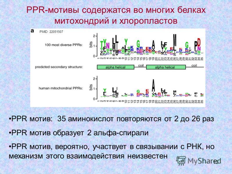 10 PMID: 22051507 PPR-мотивы содержатся во многих белках митохондрий и хлоропластов PPR мотив: 35 аминокислот повторяются от 2 до 26 раз РРR мотив образует 2 альфа-спирали PPR мотив, вероятно, участвует в связывании с РНК, но механизм этого взаимодей
