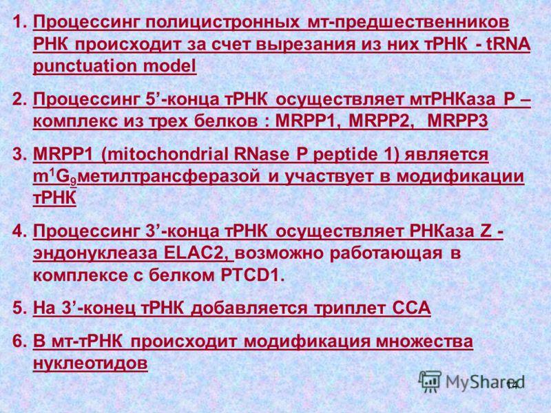 14 1.Процессинг полицистронных мт-предшественников РНК происходит за счет вырезания из них тРНК - tRNA punctuation model 2.Процессинг 5-конца тРНК осуществляет мтРНКаза Р – комплекс из трех белков : MRPP1, MRPP2, MRPP3 3.MRPP1 (mitochondrial RNase P