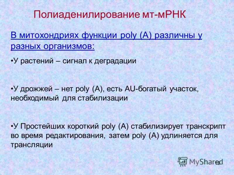 18 В митохондриях функции poly (A) различны у разных организмов: У растений – сигнал к деградации У дрожжей – нет poly (A), есть АU-богатый участок, необходимый для стабилизации У Простейших короткий poly (A) стабилизирует транскрипт во время редакти