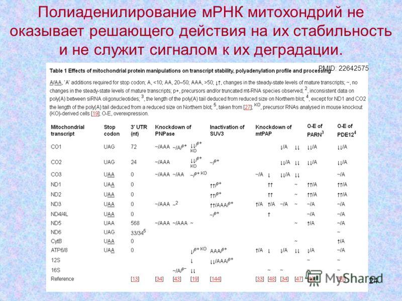 24 PMID: 22642575 Полиаденилирование мРНК митохондрий не оказывает решающего действия на их стабильность и не служит сигналом к их деградации.