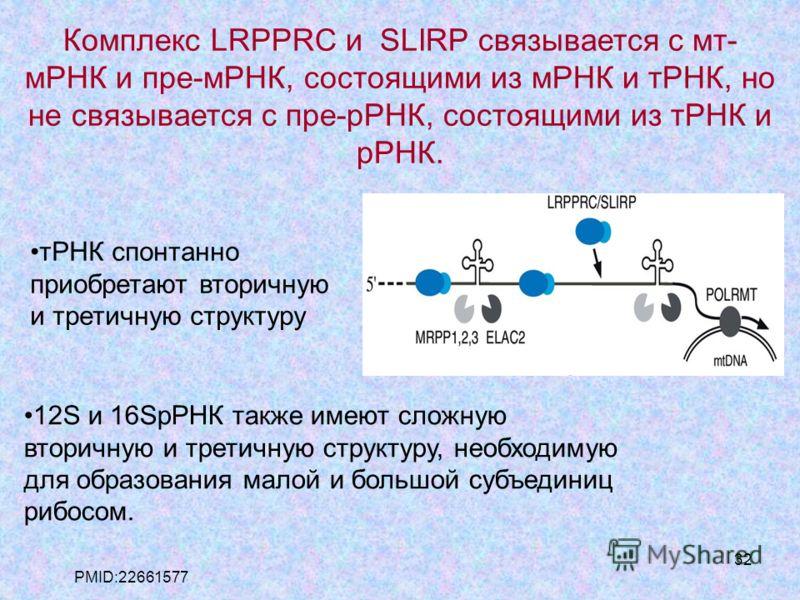 32 Комплекс LRPPRC и SLIRP связывается с мт- мРНК и пре-мРНК, состоящими из мРНК и тРНК, но не связывается с пре-рРНК, состоящими из тРНК и рРНК. 12S и 16SрРНК также имеют сложную вторичную и третичную структуру, необходимую для образования малой и б