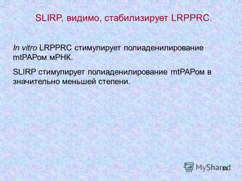 34 SLIRP, видимо, стабилизирует LRPPRC. In vitro LRPPRC стимулирует полиаденилирование mtРАРом мРНК. SLIRP стимулирует полиаденилирование mtРАРом в значительно меньшей степени.
