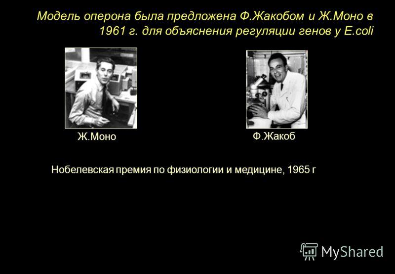 Модель оперона была предложена Ф.Жакобом и Ж.Моно в 1961 г. для объяснения регуляции генов у E.coli Ф.Жакоб Нобелевская премия по физиологии и медицине, 1965 г Ж.Моно