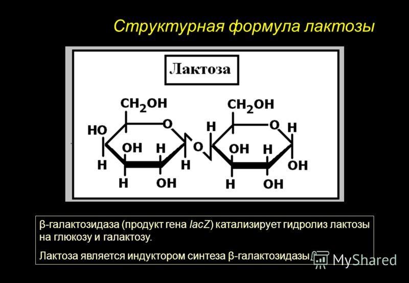 Структурная формула лактозы β-галактозидаза (продукт гена lacZ) катализирует гидролиз лактозы на глюкозу и галактозу. Лактоза является индуктором синтеза β-галактозидазы
