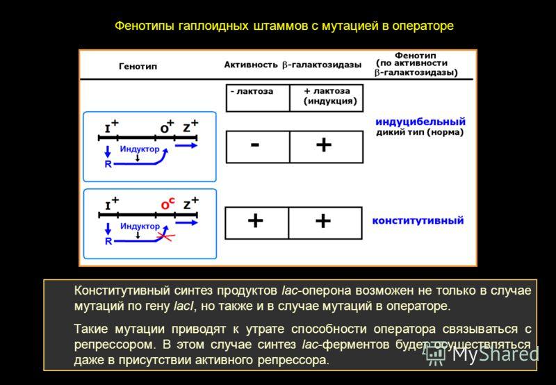 Конститутивный синтез продуктов lac-оперона возможен не только в случае мутаций по гену lacI, но также и в случае мутаций в операторе. Такие мутации приводят к утрате способности оператора связываться с репрессором. В этом случае синтез lac-ферментов