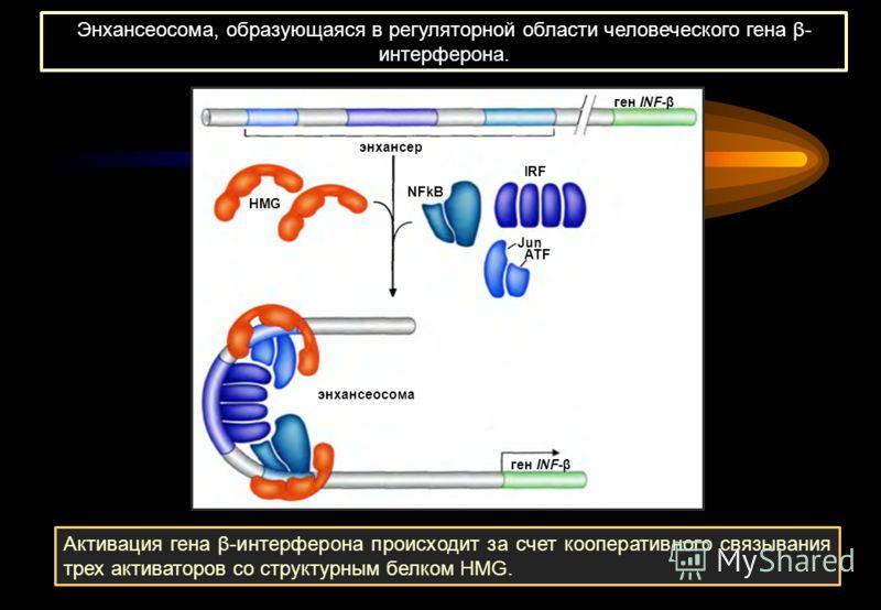 Энхансеосома, образующаяся в регуляторной области человеческого гена β- интерферона. Активация гена β-интерферона происходит за счет кооперативного связывания трех активаторов со структурным белком HMG. ген INF-β NFkB IRF ATF Jun HMG энхансер энхансе