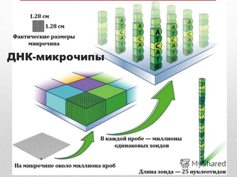 ДНК-микрочипы