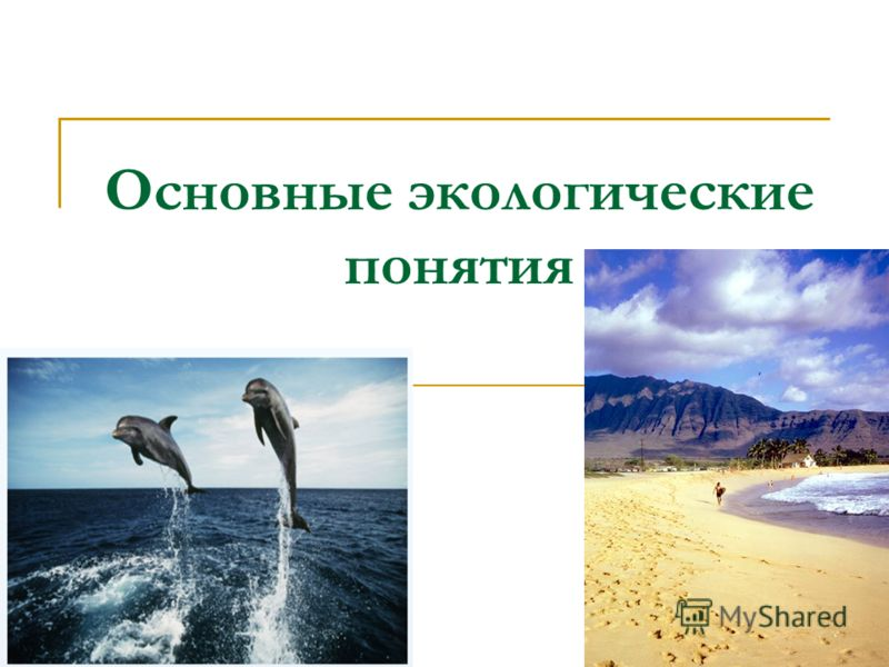 Основные экологические понятия