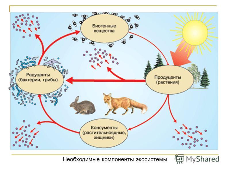 Необходимые компоненты экосистемы