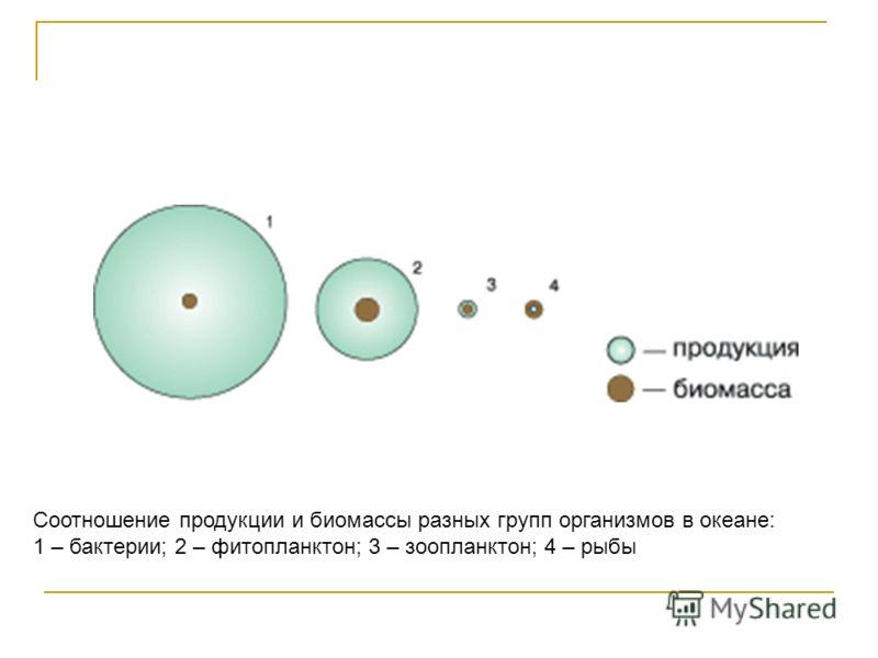 Соотношение продукции и биомассы разных групп организмов в океане: 1 – бактерии; 2 – фитопланктон; 3 – зоопланктон; 4 – рыбы