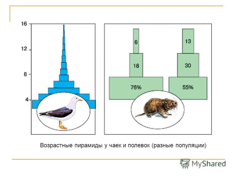 Возрастные пирамиды у чаек и полевок (разные популяции)