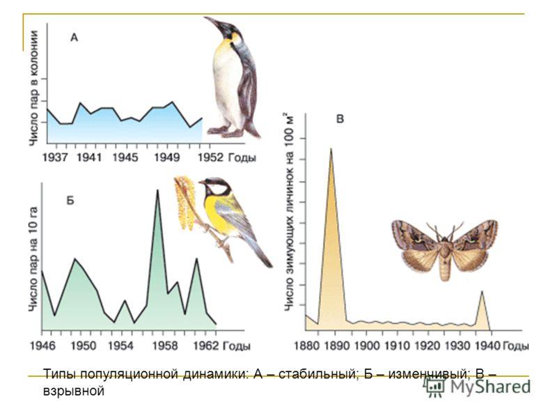 Типы популяционной динамики: А – стабильный; Б – изменчивый; В – взрывной