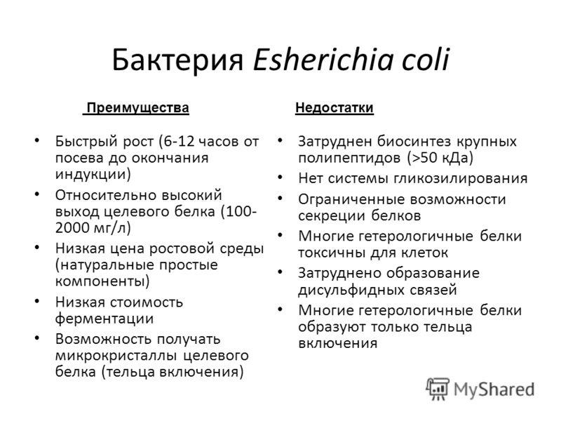 Бактерия Esherichia coli Быстрый рост (6-12 часов от посева до окончания индукции) Относительно высокий выход целевого белка (100- 2000 мг/л) Низкая цена ростовой среды (натуральные простые компоненты) Низкая стоимость ферментации Возможность получат