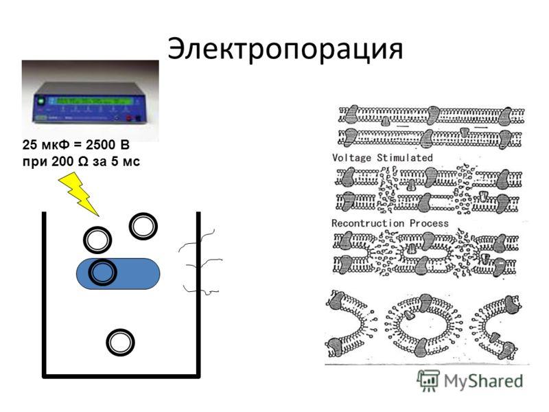 Электропорация 25 мкФ = 2500 В при 200 Ω за 5 мс