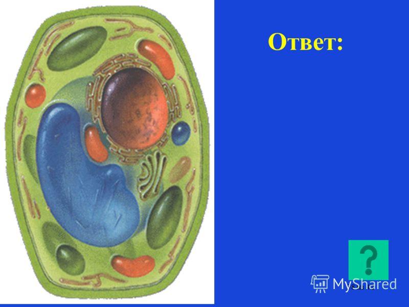 Из органоидов клетки составьте растительную клетку. 37 из 42
