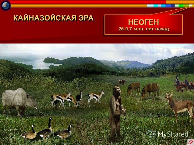 КАЙНАЗОЙСКАЯ ЭРА НЕОГЕН 25-0,7 млн. лет назад НЕОГЕН