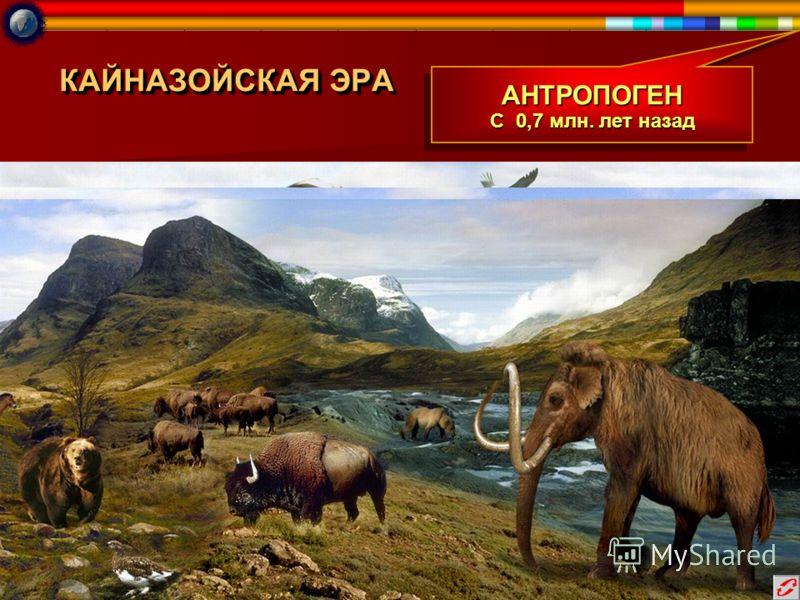 КАЙНАЗОЙСКАЯ ЭРА АНТРОПОГЕН С 0,7 млн. лет назад