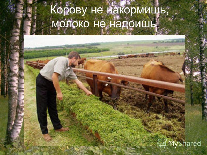 Корову не накормишь, молоко не надоишь.