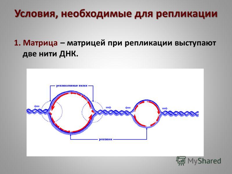 Условия, необходимые для репликации 1. Матрица – матрицей при репликации выступают две нити ДНК.