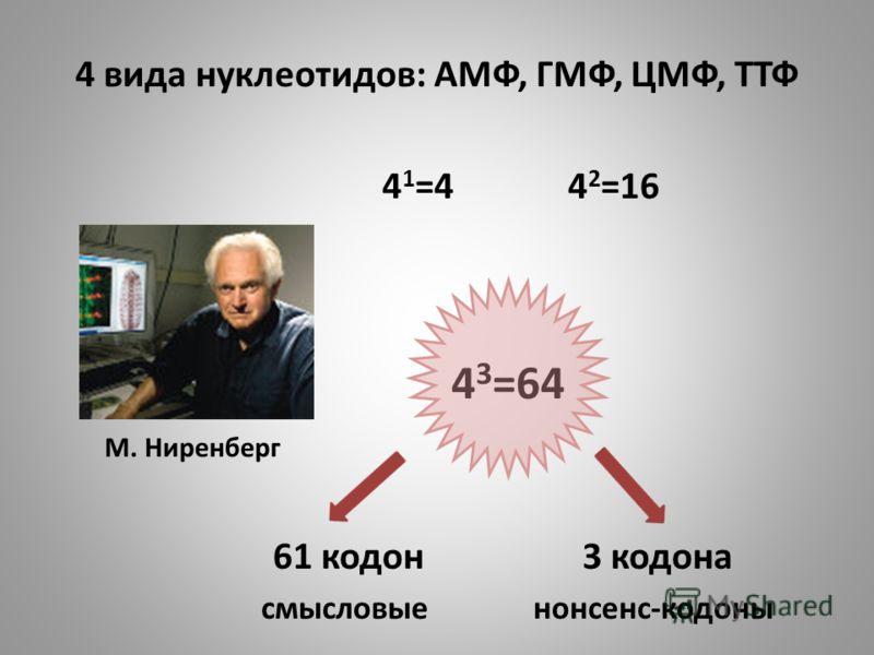 4 вида нуклеотидов: АМФ, ГМФ, ЦМФ, ТТФ 4 1 =4 4 2 =16 4 3 =64 М. Ниренберг 61 кодон 3 кодона смысловые нонсенс-кодоны