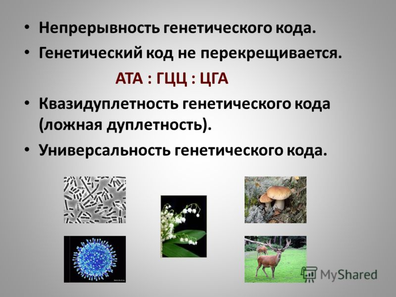 Непрерывность генетического кода. Генетический код не перекрещивается. АТА : ГЦЦ : ЦГА Квазидуплетность генетического кода (ложная дуплетность). Универсальность генетического кода.
