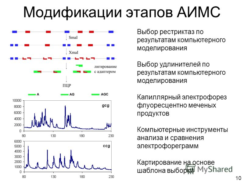 Модификации этапов АИМС Капиллярный электрофорез флуоресцентно меченых продуктов Компьютерные инструменты анализа и сравнения электрофореграмм Картирование на основе шаблона выборки Выбор рестриктаз по результатам компьютерного моделирования Выбор уд