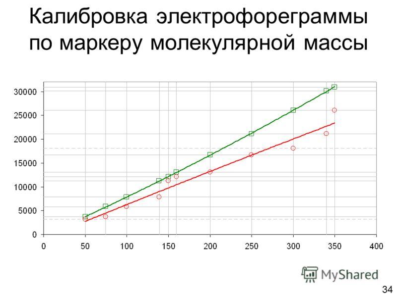 Калибровка электрофореграммы по маркеру молекулярной массы 34