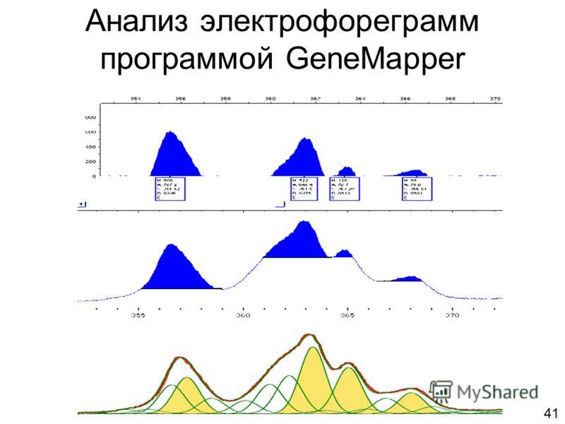 Анализ электрофореграмм программой GeneMapper 41