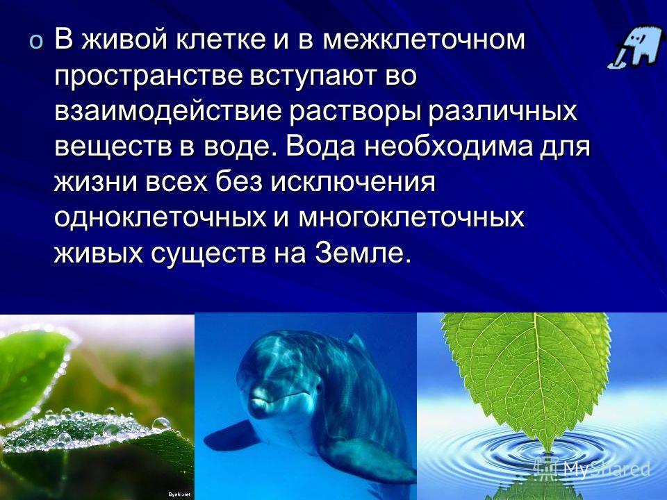 o В живой клетке и в межклеточном пространстве вступают во взаимодействие растворы различных веществ в воде. Вода необходима для жизни всех без исключения одноклеточных и многоклеточных живых существ на Земле.