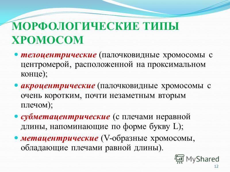 МОРФОЛОГИЧЕСКИЕ ТИПЫ ХРОМОСОМ телоцентрические (палочковидные хромосомы с центромерой, расположенной на проксимальном конце); акроцентрические (палочковидные хромосомы с очень коротким, почти незаметным вторым плечом); субметацентрические (с плечами