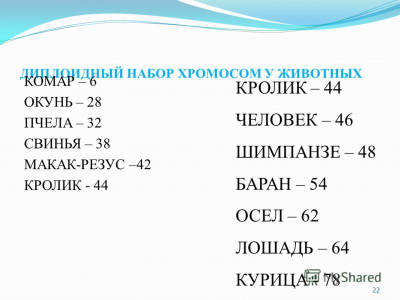 ДИПЛОИДНЫЙ НАБОР ХРОМОСОМ У ЖИВОТНЫХ КОМАР – 6 ОКУНЬ – 28 ПЧЕЛА – 32 СВИНЬЯ – 38 МАКАК-РЕЗУС –42 КРОЛИК - 44 КРОЛИК – 44 ЧЕЛОВЕК – 46 ШИМПАНЗЕ – 48 БАРАН – 54 ОСЕЛ – 62 ЛОШАДЬ – 64 КУРИЦА - 78 22