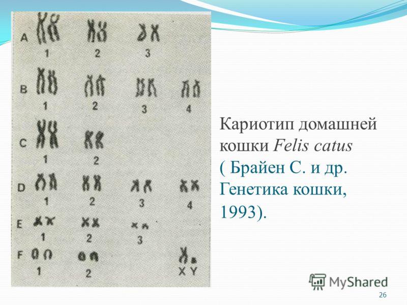 Кариотип домашней кошки Felis catus ( Брайен С. и др. Генетика кошки, 1993). 26