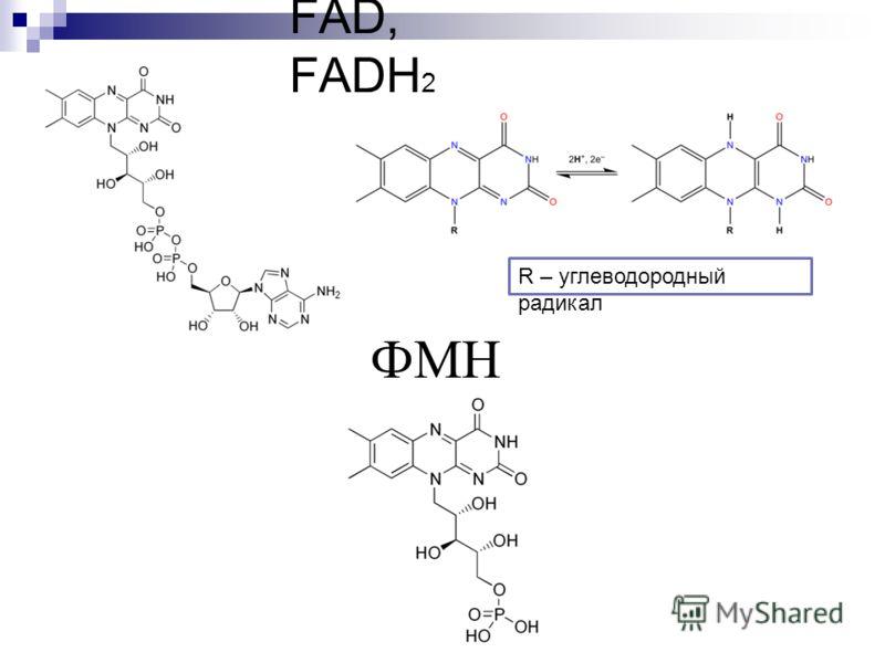 FAD, FADH 2 ФМН R – углеводородный радикал