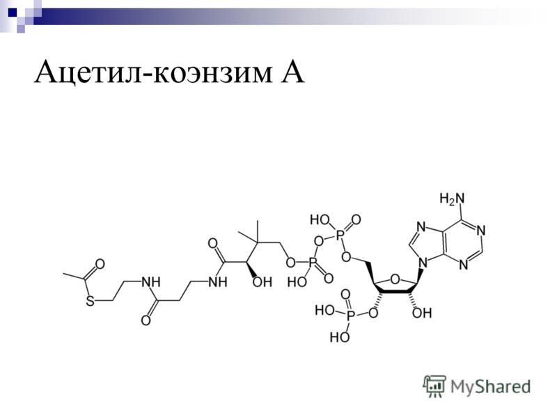 Ацетил-коэнзим А