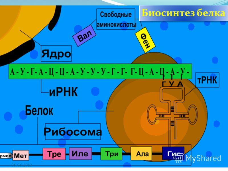 05.06.2013 Биосинтез белка