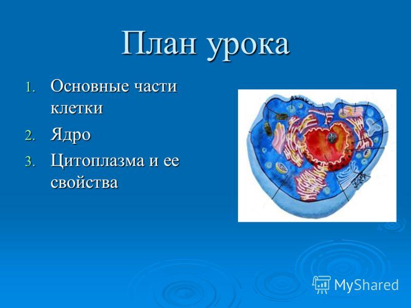 План урока 1. Основные части клетки 2. Ядро 3. Цитоплазма и ее свойства